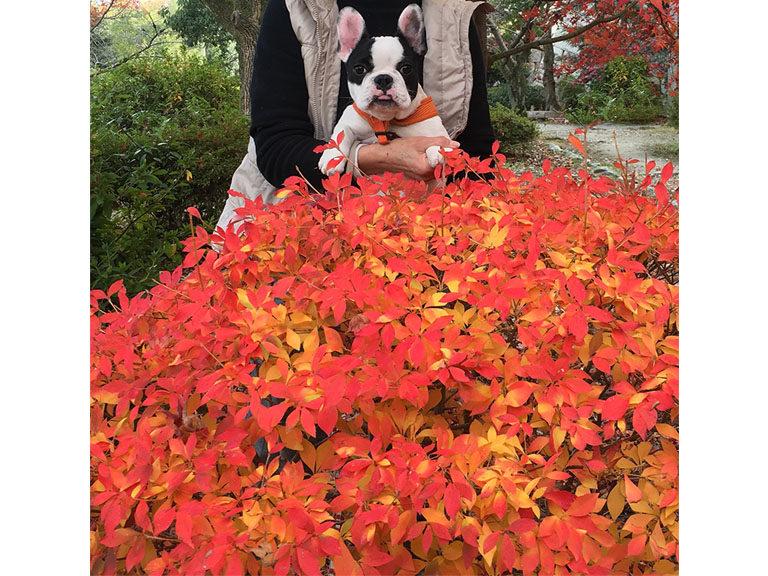 紅葉 なんの木?